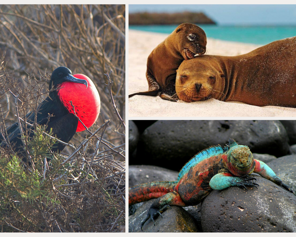 Nowhere on Earth has the diversity of wildlife found in Galapagos
