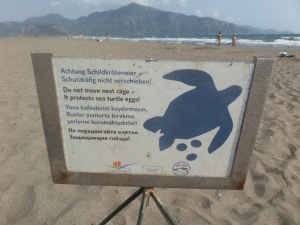 The turtles are protected within an Environmental Protection Area