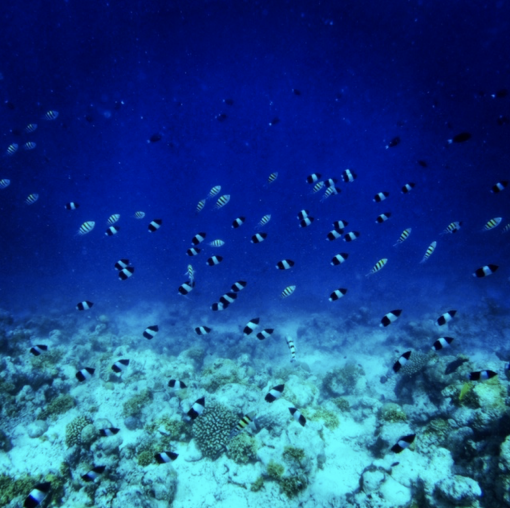 The House Reef is a great place to kick back and relax